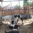 Строительство и реконструкция десяти животноводческих комплексов планируется в регионе