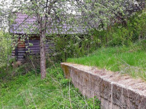 sad-derevnya-goloshubiha-kstovskiy-rayon фото